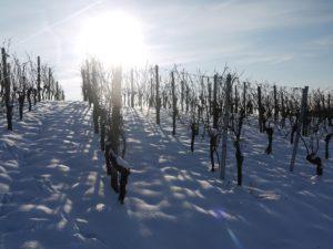 Weinberge_winter
